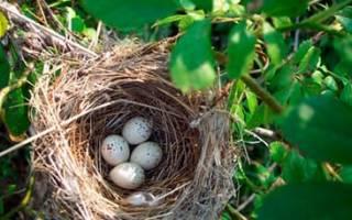 Видеть во сне гнездо