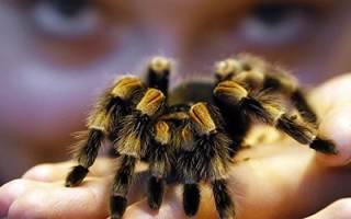 Сонник убить паука большого