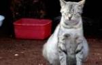К чему снится что кошка родила котят