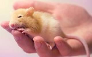 К чему снятся белые мыши маленькие много