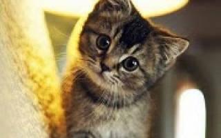 Сонник котята маленькие много