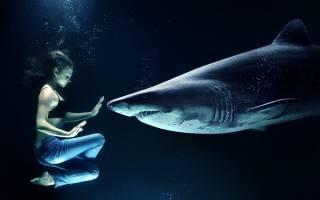 Сон акула в воде