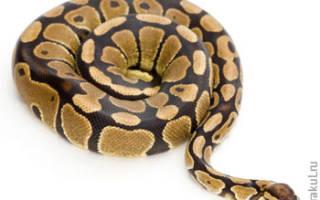 К чему снится спящая змея