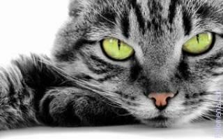 Во сне умирающий кот