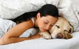 К чему снится собака девушке незамужней