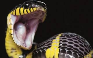 Есть во сне змею сонник