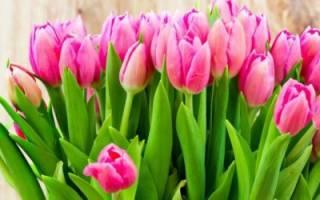 К чему снятся белые тюльпаны