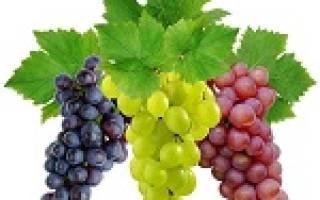 К чему снится есть виноград крупный