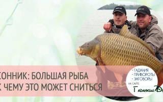 К чему снится большая рыба в воде