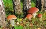 Видеть во сне грибы белые женщине