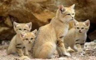 К чему снятся мертвые котята маленькие