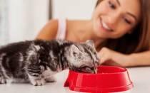 К чему снится кормить грудью котенка