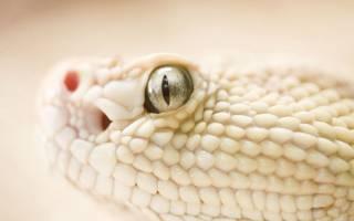 Сонник белая змея нападает