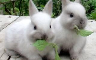 К чему снится много кроликов