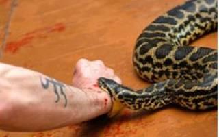 К чему снится змея ужалила