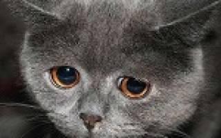 К чему снятся дохлые котята