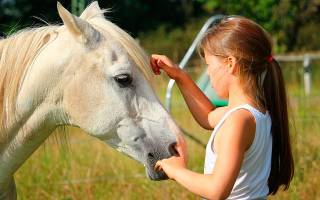 К чему снится белая лошадь мужчине
