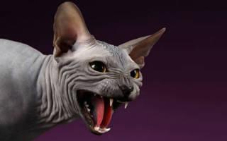 К чему снится облезлая кошка