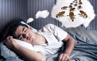Сон большой таракан