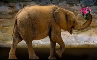 Сонник слон большой