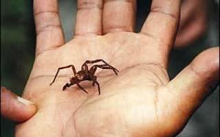 Сонник к чему снятся пауки и паутина