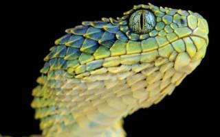 К чему снится змея без головы