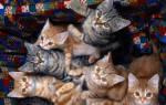 Видеть во сне много котят