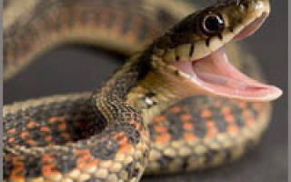Душить змею во сне