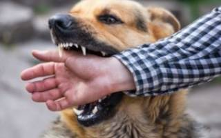 Сонник собака кусает
