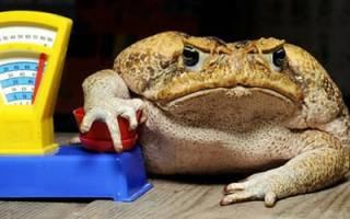 Сонник жаба
