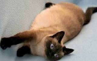 Сонник беременная кошка во сне