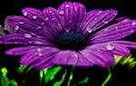 Сонник фиолетовые волосы