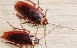 К чему снятся тараканы много живые убивать