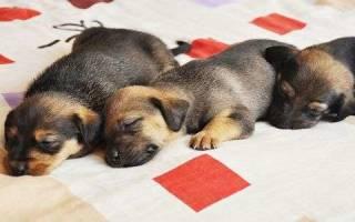 Мыть собаку во сне