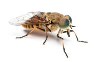 Сон приснился муха
