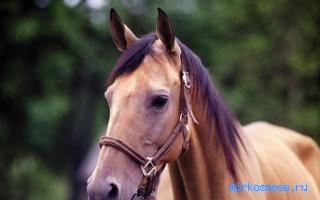 Сонник конь