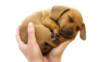 Сонник держать собаку на руках