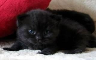 К чему снится маленький черный котенок