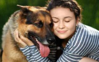 Обнимать собаку во сне