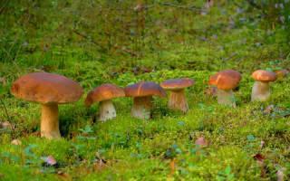 К чему снится собирать грибы в лесу