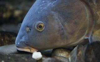 Видеть во сне голову рыбы