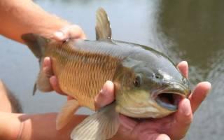Сонник поймать большую рыбу руками