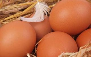 К чему снятся яйца куриные много собирать