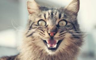 Сонник кошка кусает за руку