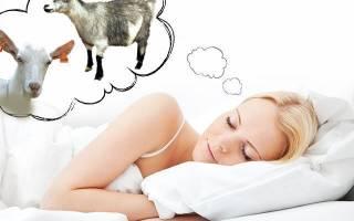 К чему снится коза белая женщине