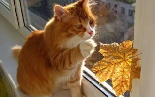 Видеть во сне рыжего кота