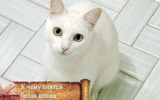 Белый котенок во сне что значит