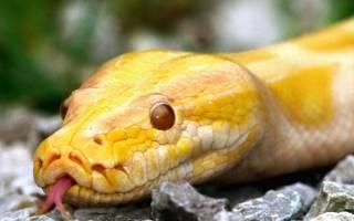 К чему снится маленькая желтая змея
