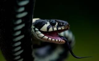 Сонник есть змею