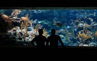 К чему снится аквариум с рыбками девушке